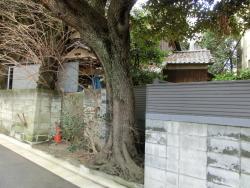 大きな木 三田用水散策7