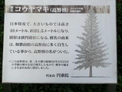 円乗院 空襲で焼けた高野槙3 代田・代沢散策4