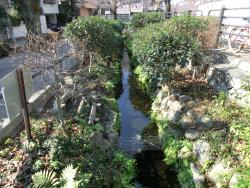 北沢川緑道のせせらぎ1 代田・代沢散策4