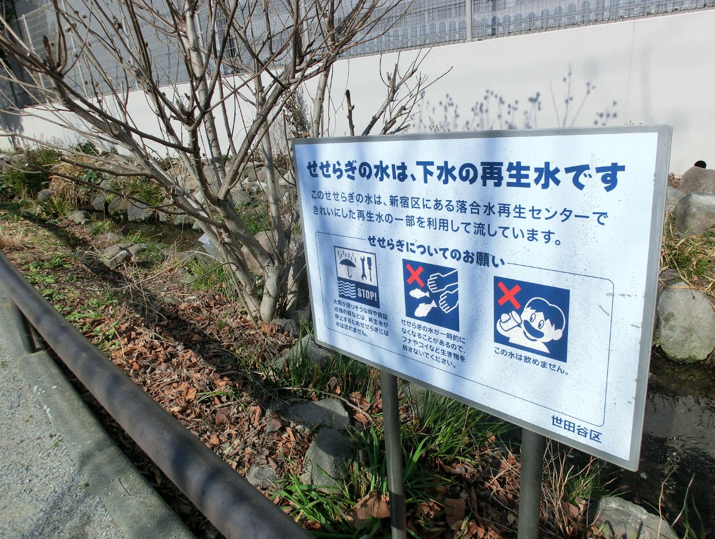 北沢川緑道のせせらぎ3 代田・代沢散策4