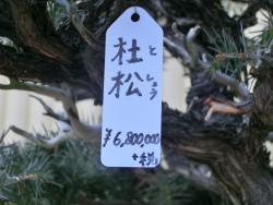 680万円の盆栽2 日本橋三越本店屋上記事