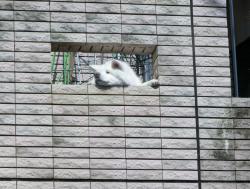 なべおさみの自宅 犬が顔を出している 代田・代沢散策5