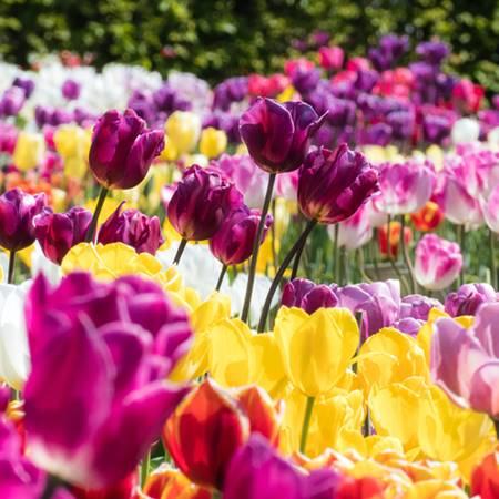 flower_20210509090405046.jpeg