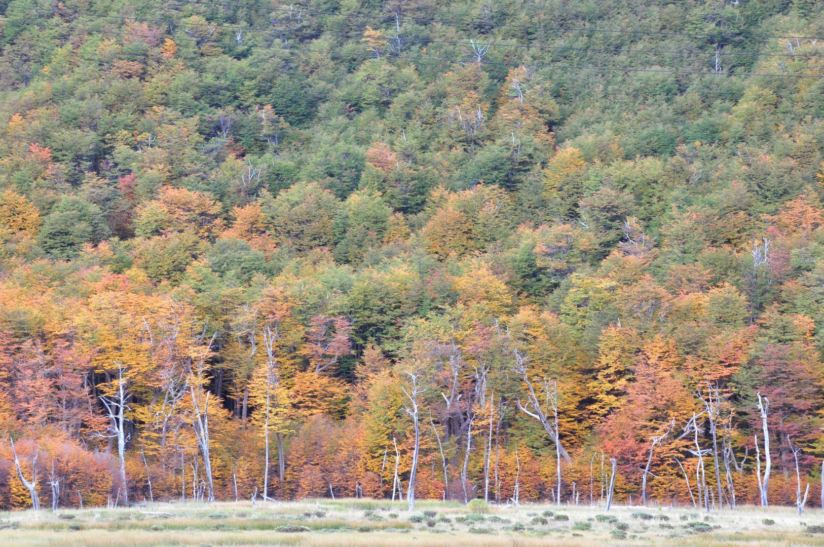 bosque canbiando su color