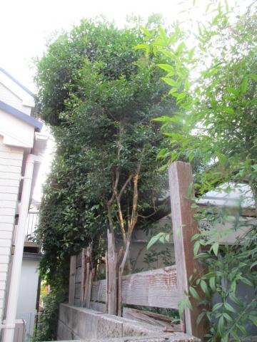 庭木と板塀