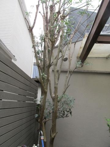 庭木剪定後