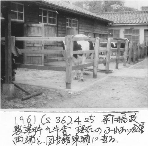 1g 600 1961_s36_0425 新井高牛舎