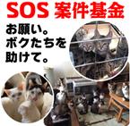 SOS_R.jpg