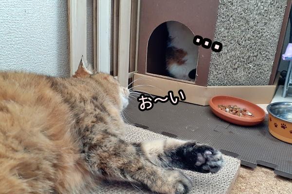 サバトラ 猫
