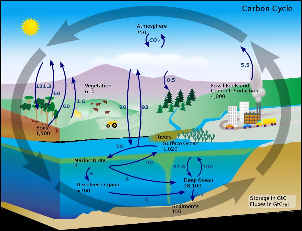 炭素循環の概念図