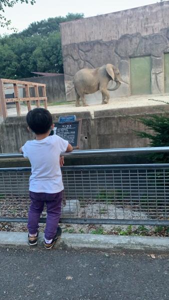 東武動物公園・ゾウ
