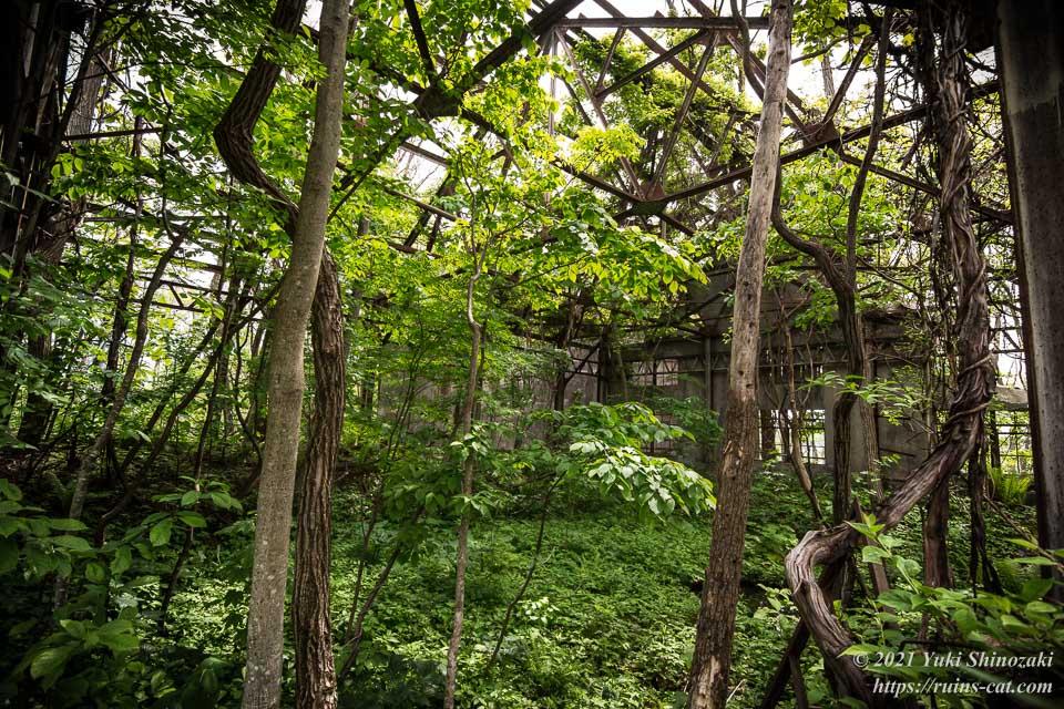 緑のジャングルと化した変電施設跡