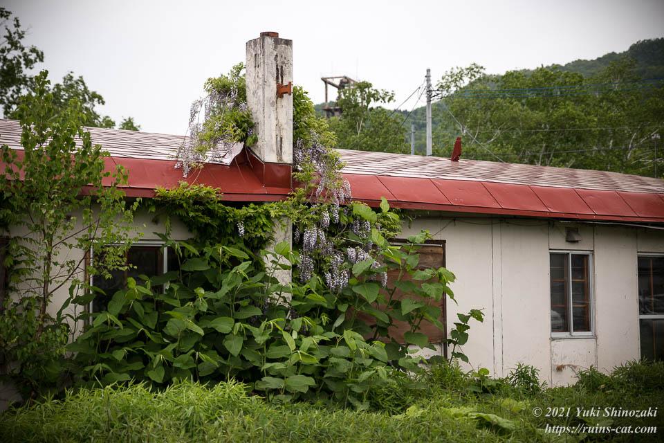 暖房用の煙突にたかる藤