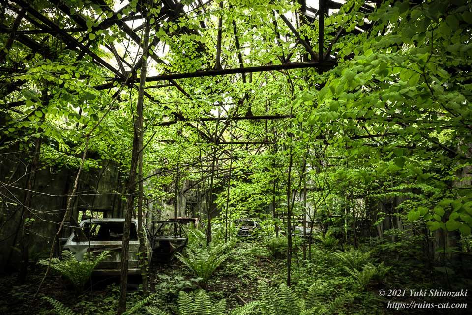 廃車と植物の楽園と化した安全灯室内部