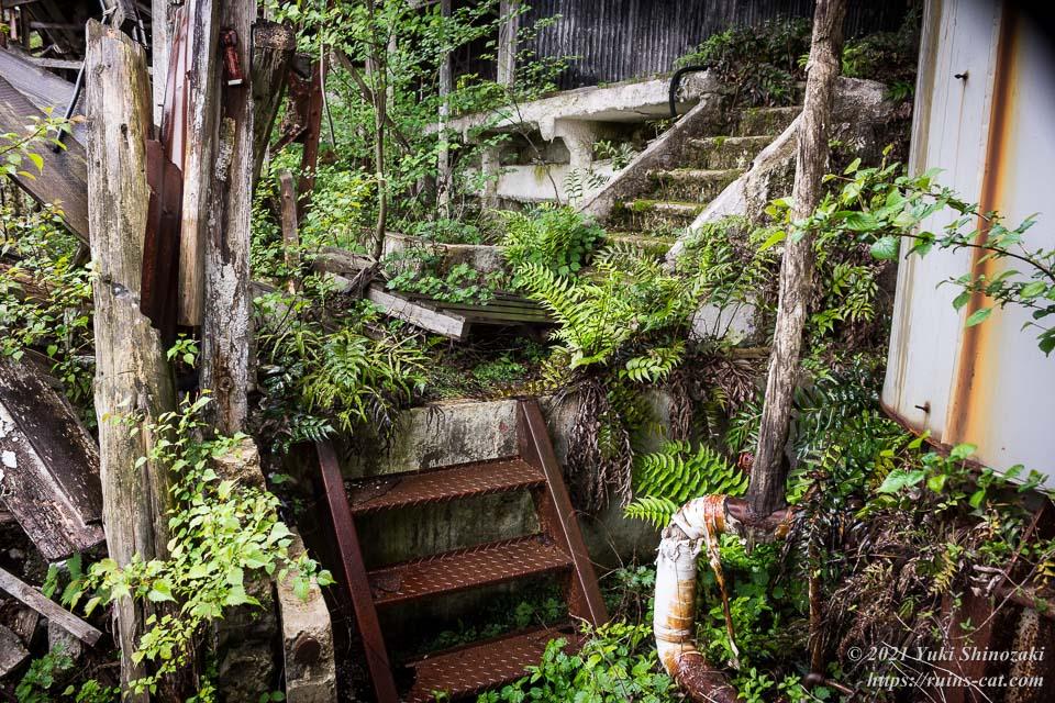 植物が繁茂する階段通路