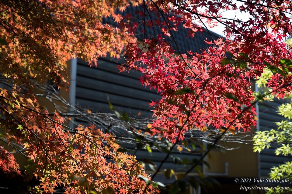 鬼怒川温泉の美しい紅葉