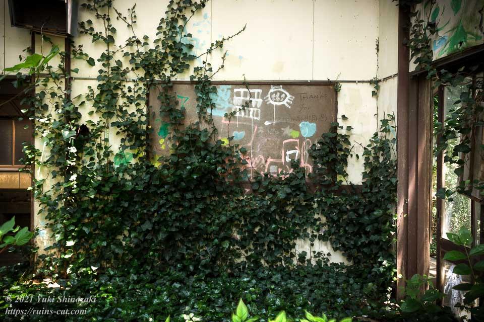 壁の落書きを覆い隠そうとしている蔦