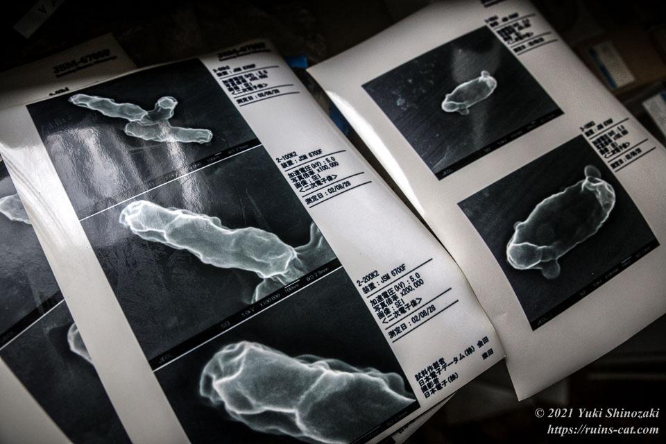病原体の電子顕微鏡写真