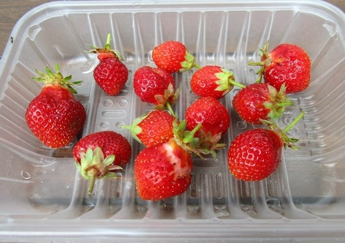 210616strawberry2