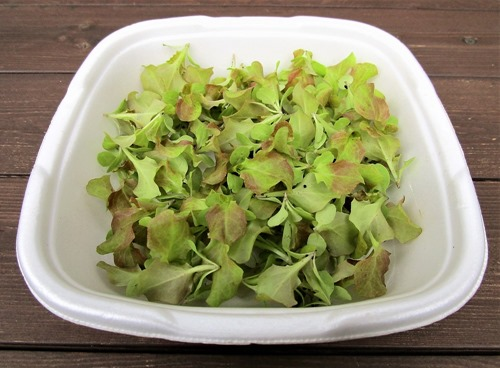 211019sunny-lettuce3