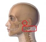 下顎頭と頸椎