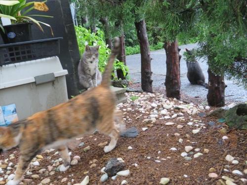 降り続き柱の雨の止め間、近所の野良ネコちゃんらが出てきました。2021.07.02