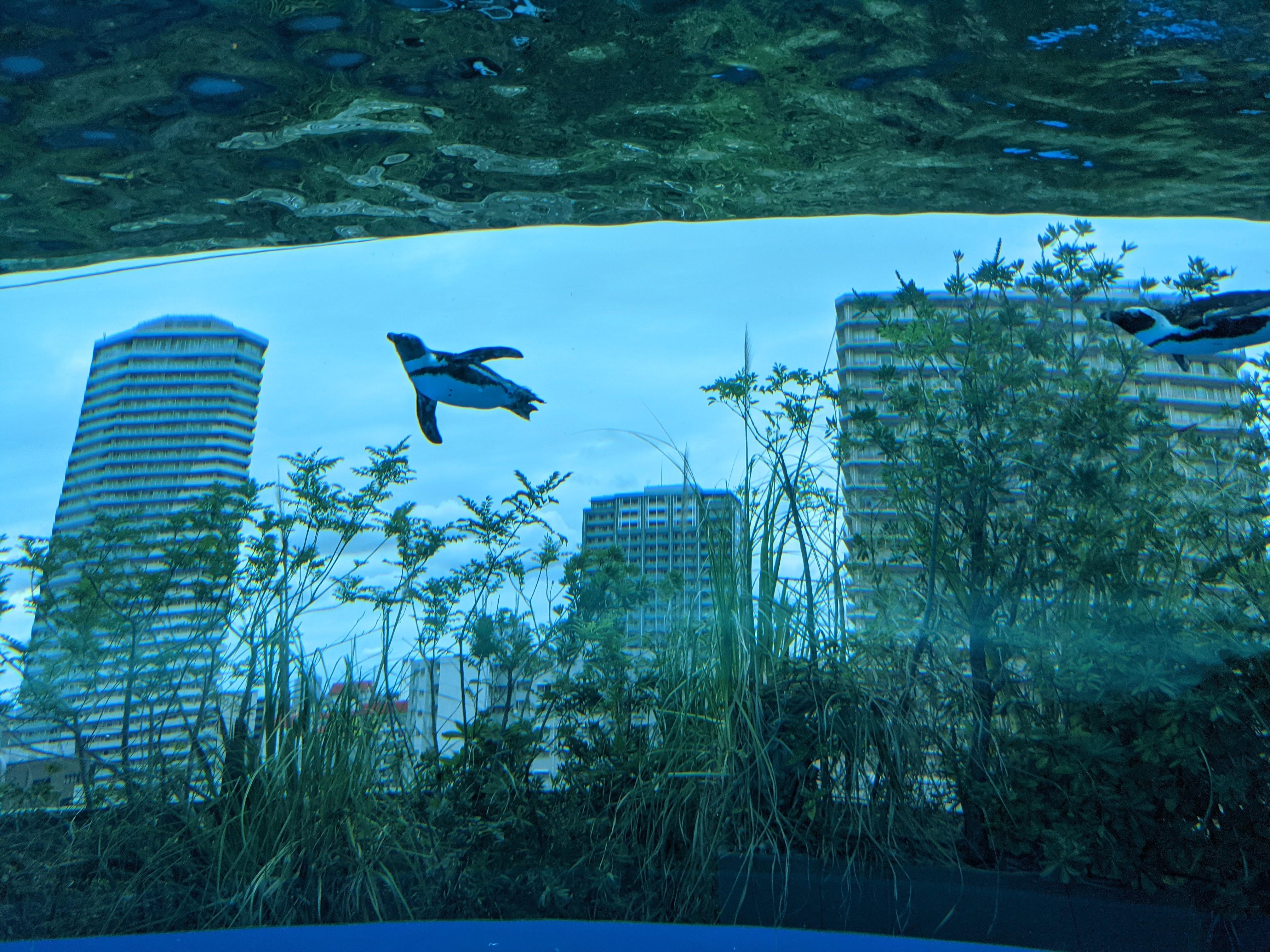 サンシャイン水族館19