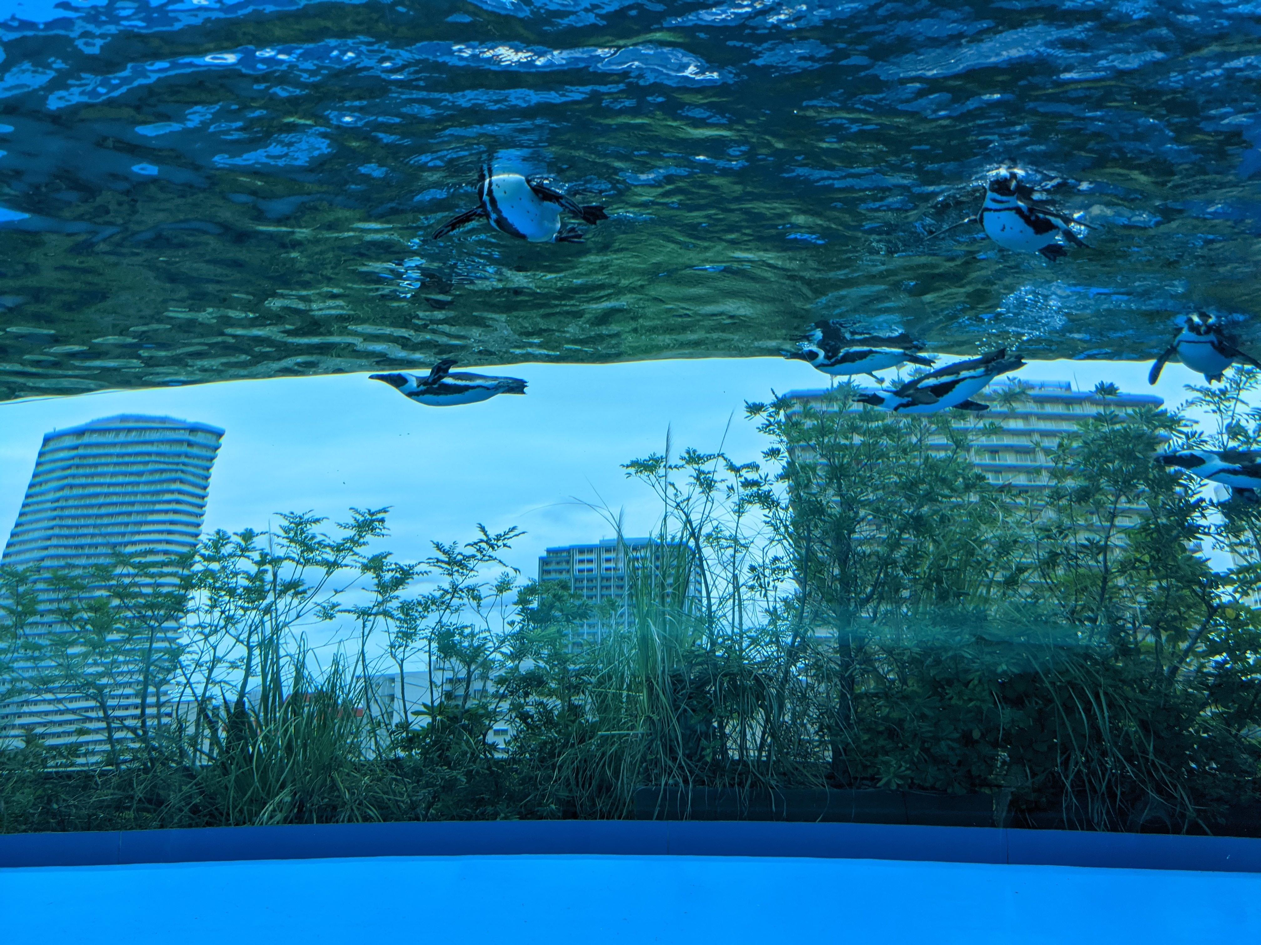 サンシャイン水族館20