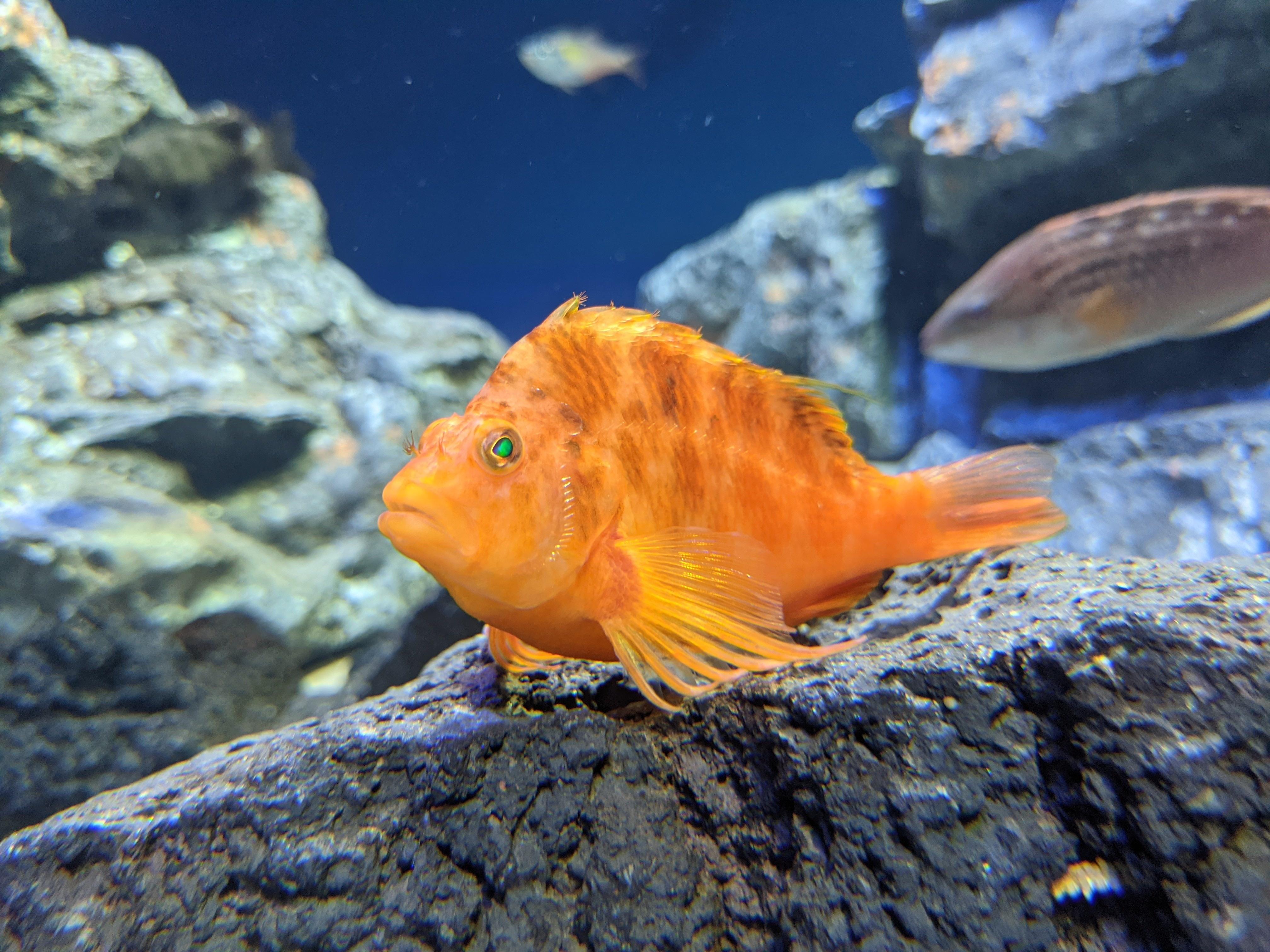 サンシャイン水族館23