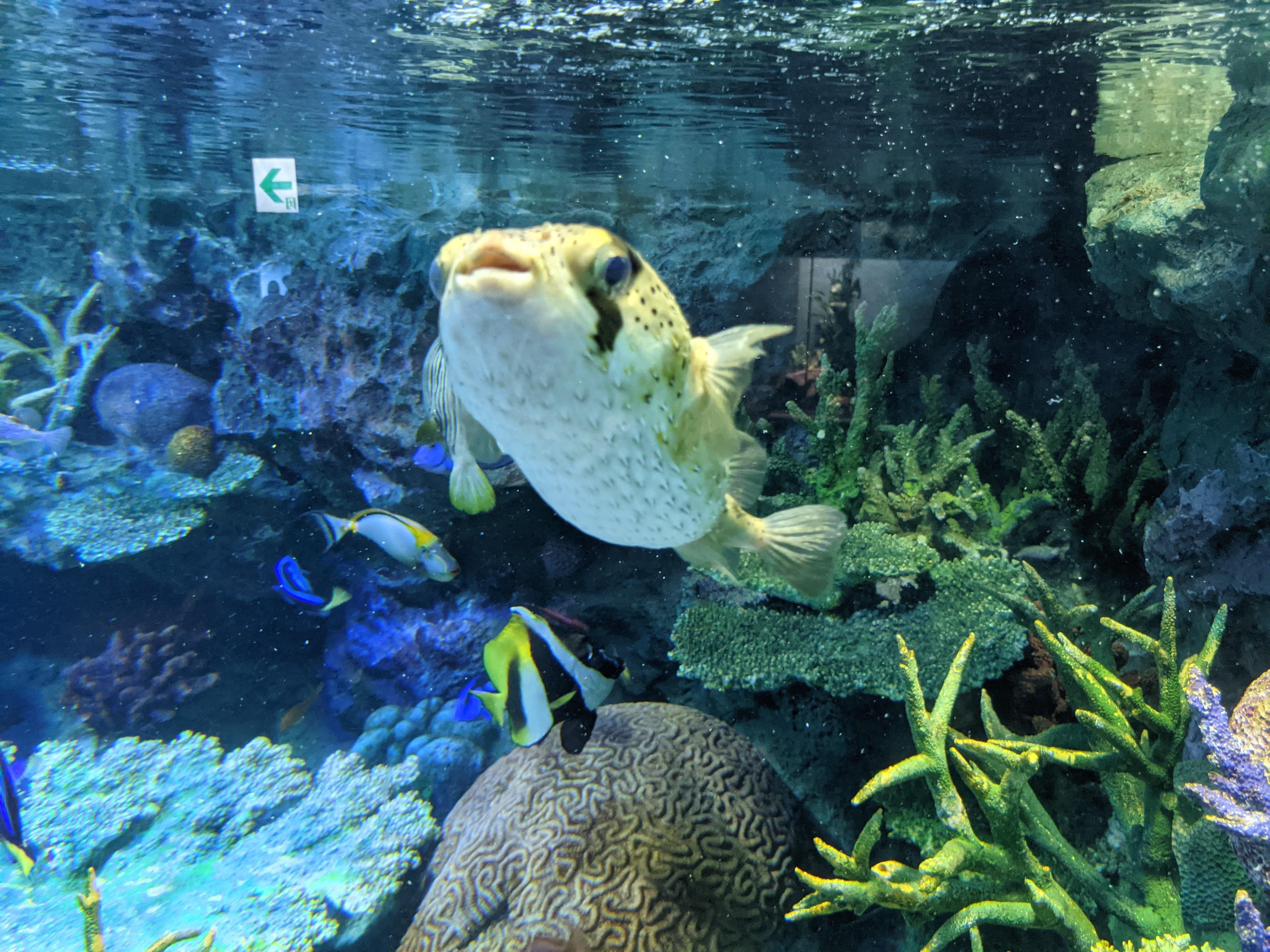 サンシャイン水族館24