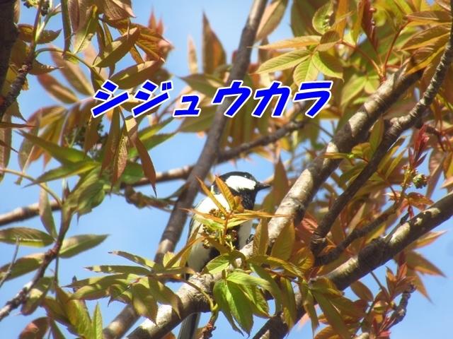 20210514IMG_3658.jpg