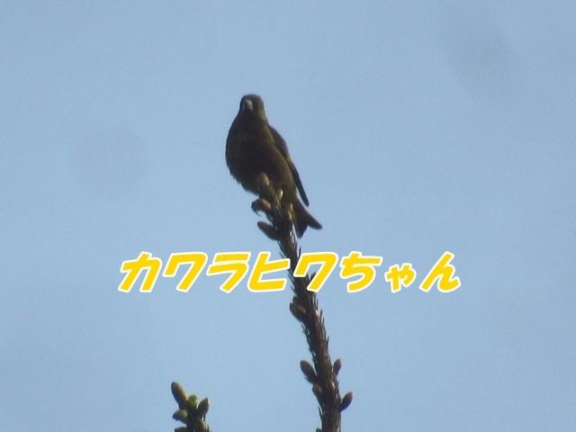 20210611IMG_7275.jpg