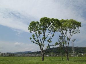 安満遺跡公園17 -8
