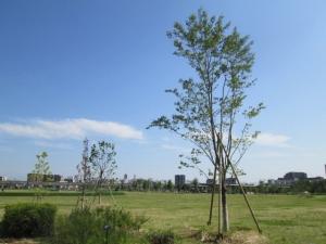 安満遺跡公園19-2