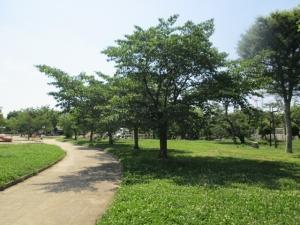 城跡公園19-5