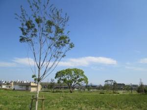 安満遺跡公園19-9
