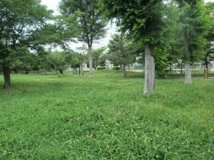 城跡公園20-2