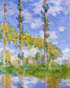 陽を浴びるポプラ並木(ポプラ、3本の木、夏)