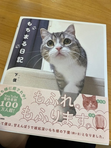 ブログ用 猫 2
