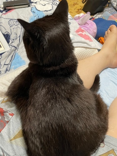 ブログ用 猫 3